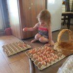 Разбираем урожай яиц